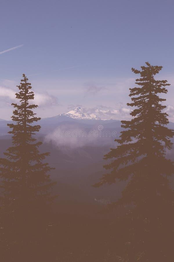 Mooi schot van pijnboombomen met een sneeuw hoge berg binnen - tussen op de achtergrond royalty-vrije stock foto's