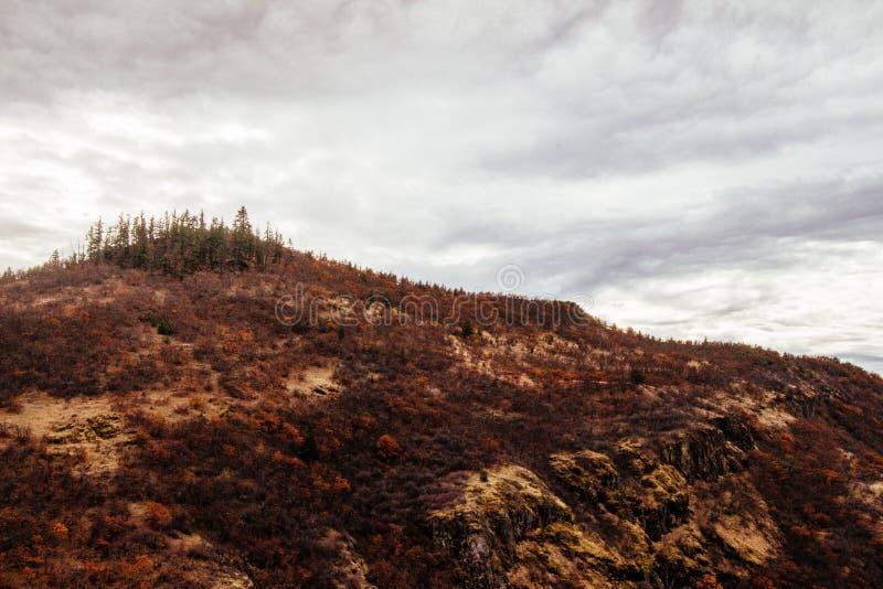 Mooi schot van steile heuvel met droog groen en bomen op de bovenkant met grijze wolken stock fotografie
