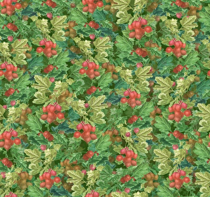 Mooi seamlesslpatroon - kruisbes groene takken en rode bessen stock illustratie