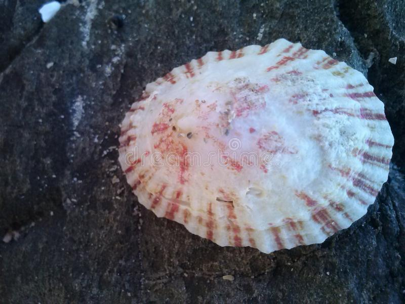 Mooi Shell royalty-vrije stock afbeelding