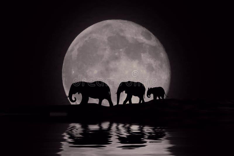 Mooi Silhouet van Afrikaanse Olifanten bij Moonrise vector illustratie