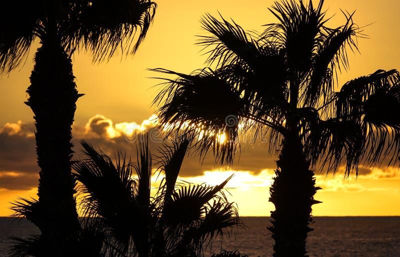 Mooi silhouet van palmen stock foto's