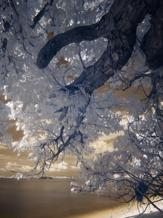 Mooi strand in dichtbij infrarood licht royalty-vrije stock afbeelding