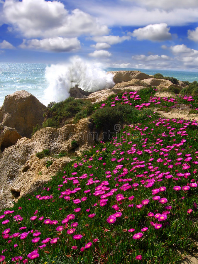 Mooi strand met bloemen, Algarve, Portugal stock foto