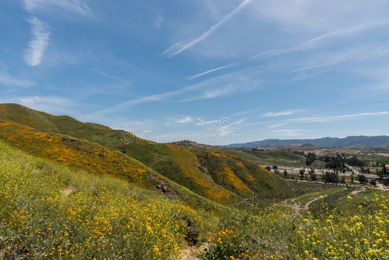 Mooi superbloomuitzicht in de Walker Canyon-bergketen dichtbij Meer Elsinore stock afbeeldingen