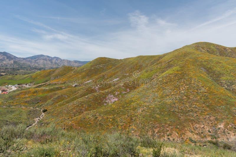 Mooi superbloomuitzicht in de Walker Canyon-bergketen dichtbij Meer Elsinore stock foto