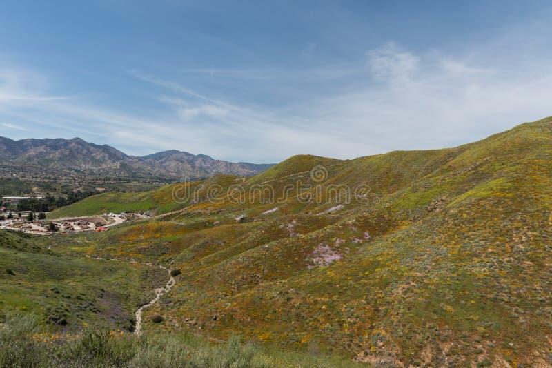 Mooi superbloomuitzicht in de Walker Canyon-bergketen dichtbij Meer Elsinore royalty-vrije stock fotografie