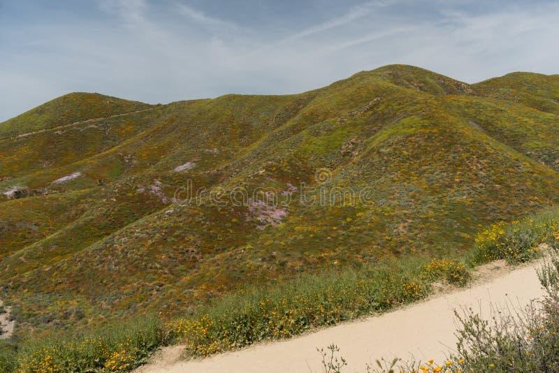 Mooi superbloomuitzicht in de Walker Canyon-bergketen dichtbij Meer Elsinore royalty-vrije stock foto