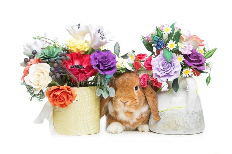 Mooi tam konijn stock afbeeldingen