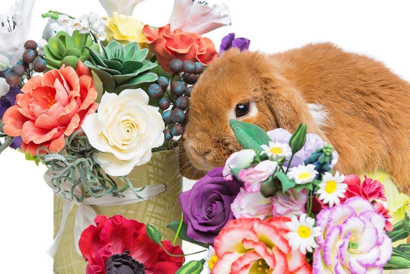 Mooi tam konijn royalty-vrije stock foto