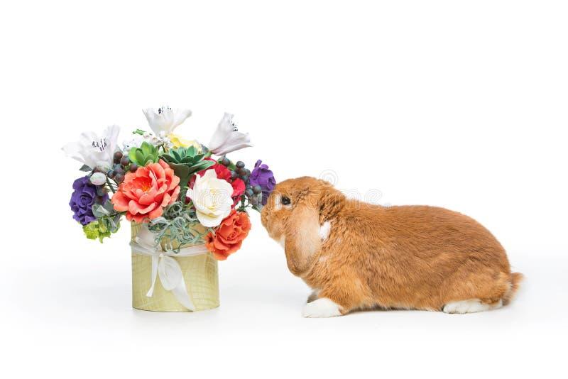 Mooi tam konijn stock afbeelding