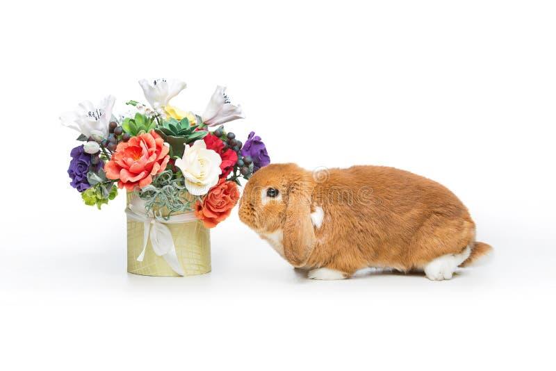 Mooi tam konijn stock foto's