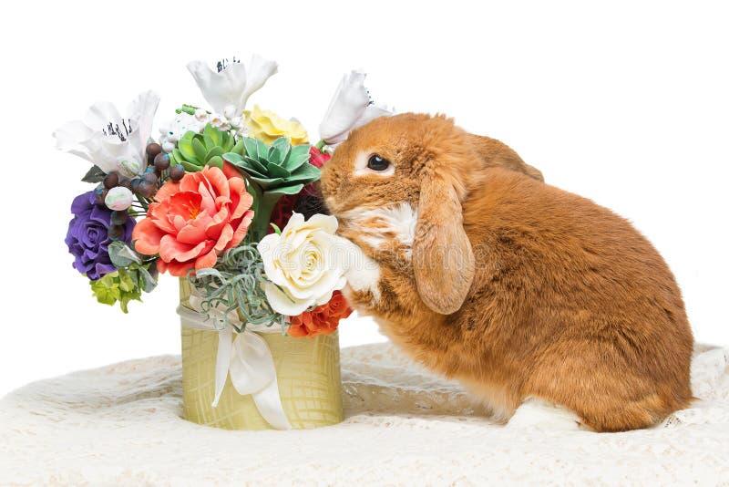 Mooi tam konijn royalty-vrije stock foto's