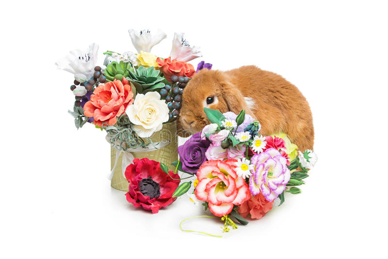 Mooi tam konijn royalty-vrije stock fotografie