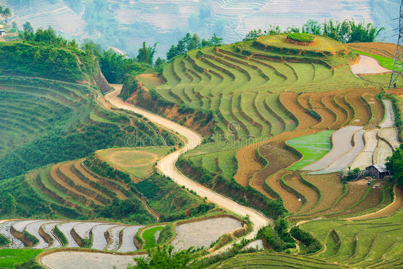 Mooi terrasvormig padieveld in de provincie van Laos cai in Vietnam stock foto's