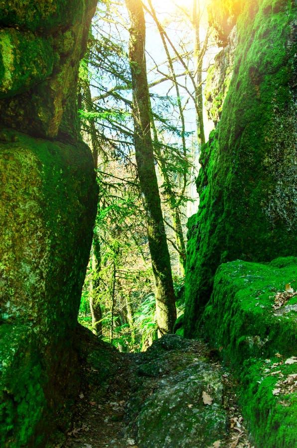 Mooi toneellandschap van Aisttal-vallei op de Aist-rivier in Boven-Oostenrijk in de zomer Het bos van de pijnboomboom met wegberg royalty-vrije stock foto's