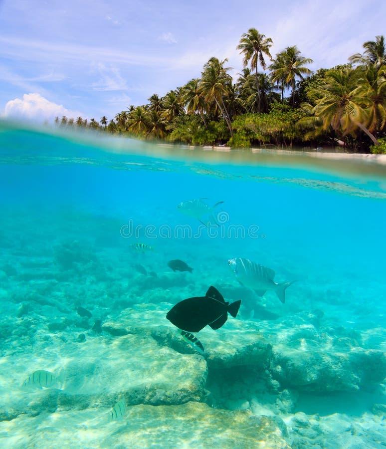 Mooi tropisch eiland in de Maldiven onder en hierboven - water stock foto