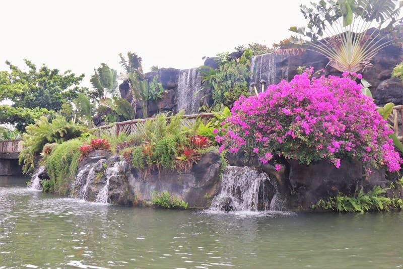 Mooi tropisch landschap van bloemen en bomen op het Eiland Hawa? royalty-vrije stock fotografie