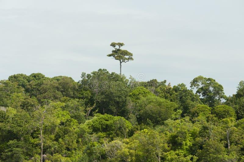 Mooi tropisch strand en regenwoud in Andaman-overzees, Thailand royalty-vrije stock afbeelding
