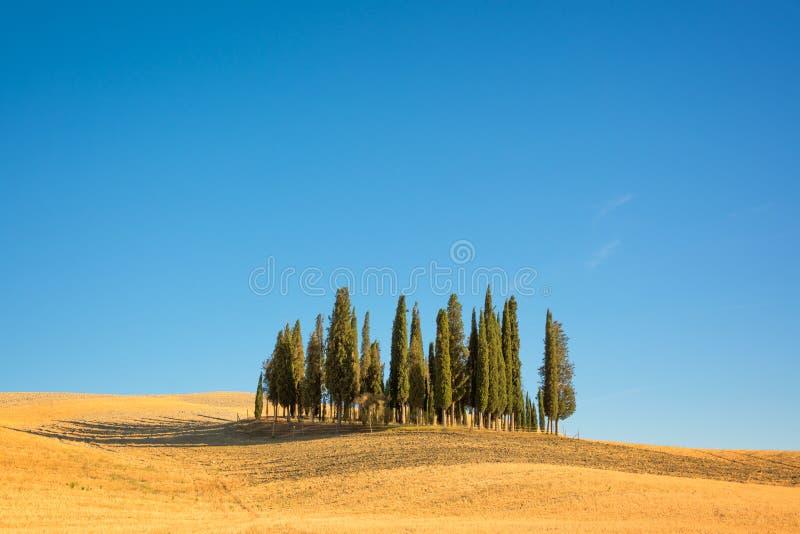 Mooi typisch Toscaans landschap met cipresbomen op een gebied in de zomer, Val D ` Orcia, Toscanië Italië royalty-vrije stock foto's