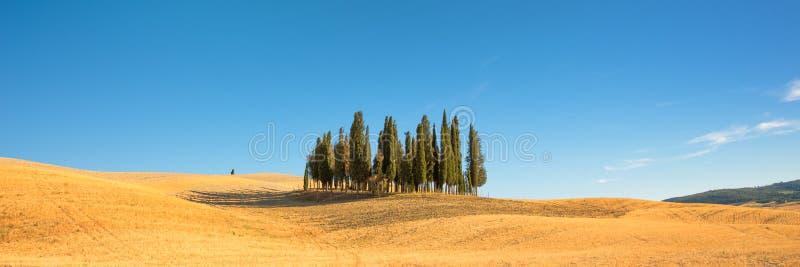 Mooi typisch Toscaans panorama met cipresbomen op een gebied in de zomer, Val D ` Orcia, Toscanië Italië stock foto's