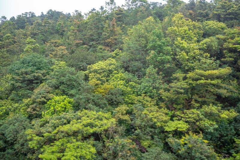 Mooi vaag vers groen boombos op berg voor achtergrond stock foto