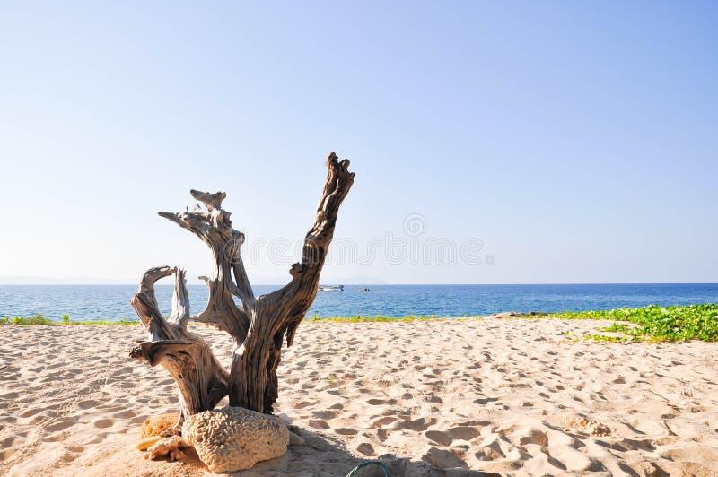 Mooi verlaten eiland in Satun royalty-vrije stock foto