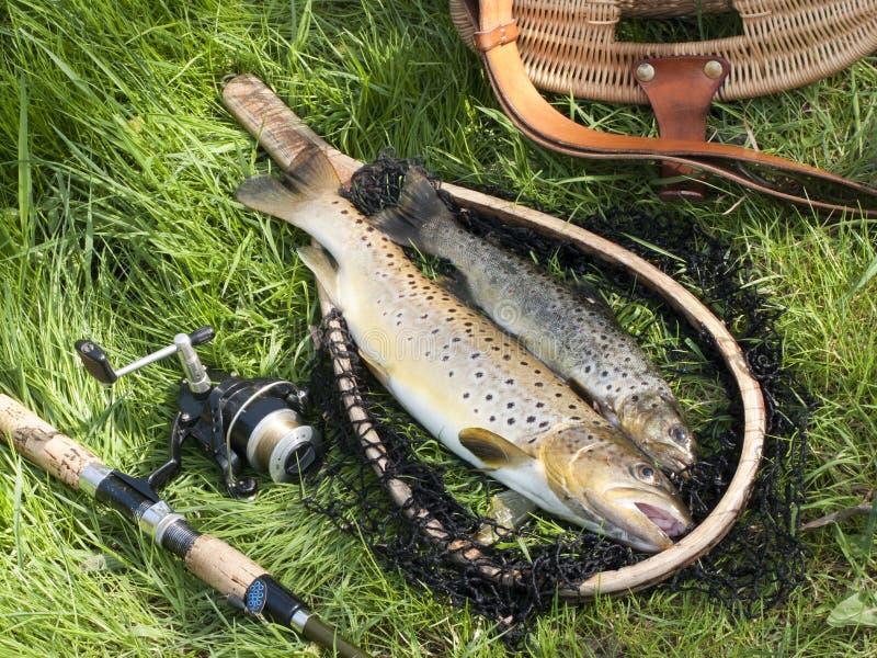 Mooi visserijstilleven met forel royalty-vrije stock foto's