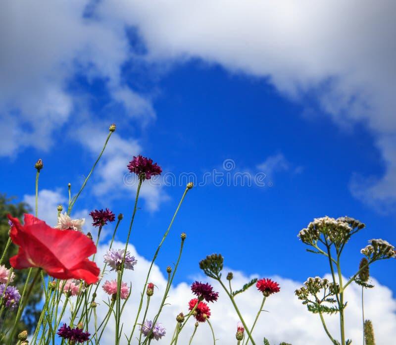 Mooi weidegebied met wilde bloemen De close-up van de lentewildflowers Het concept van de gezondheidszorg Landelijk Gebied altern royalty-vrije stock afbeeldingen