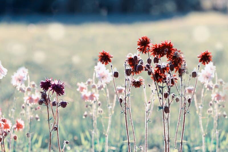 Mooi weidegebied met wilde bloemen De lente of de zomerwildflowersclose-up Het concept van de gezondheidszorg Landelijk Gebied stock foto