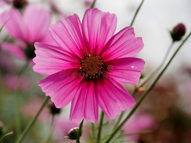Mooi weidehoogtepunt van bloemen royalty-vrije stock foto