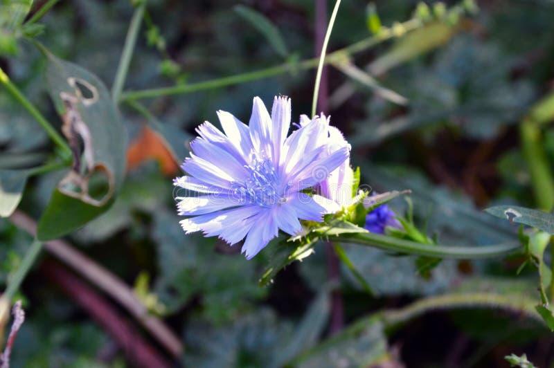 Mooi weinig blauwe bloem op een installatieachtergrond royalty-vrije stock fotografie