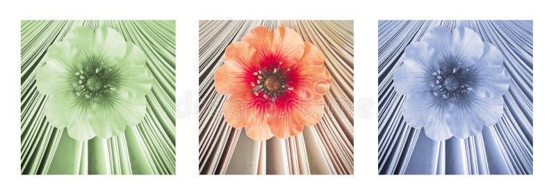 Mooi weinig bloem in boek, aroma van verhaal Triptiek in rood, groen en blauw royalty-vrije stock foto's