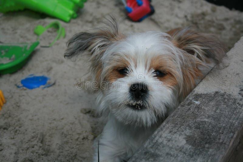 Mooi weinig hond royalty-vrije stock afbeeldingen