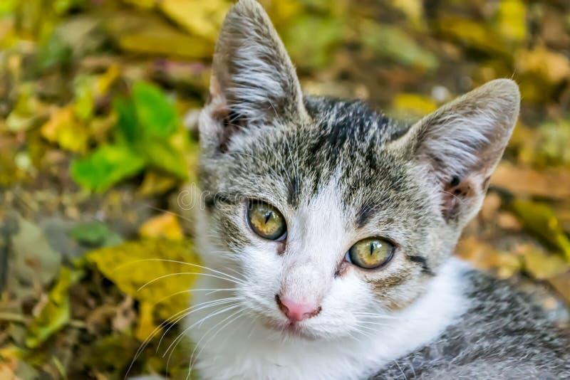 Mooi weinig kat stock afbeelding