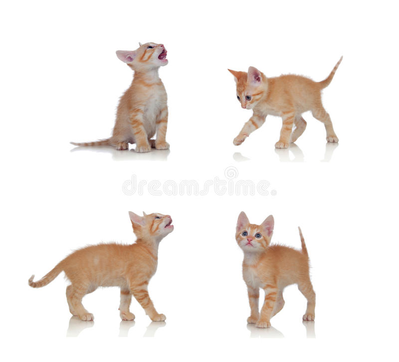 Mooi weinig kat in verschillende posities royalty-vrije stock foto's