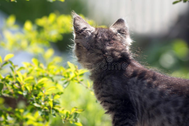 Mooi weinig katje op de aard stock foto