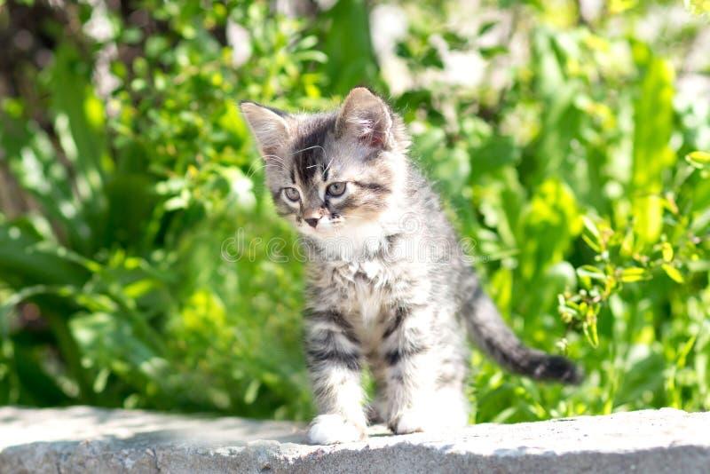 Mooi weinig katje op de aard royalty-vrije stock fotografie