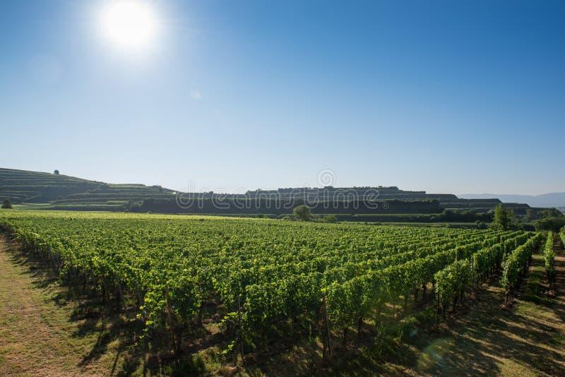 Mooi Wijngaardlandschap in Ihringen, Zuid-Duitsland stock foto