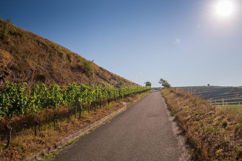 Mooi Wijngaardlandschap in Ihringen, Zuid-Duitsland stock fotografie