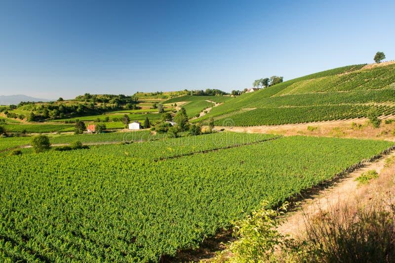 Mooi Wijngaardlandschap in Ihringen, Zuid-Duitsland stock afbeelding