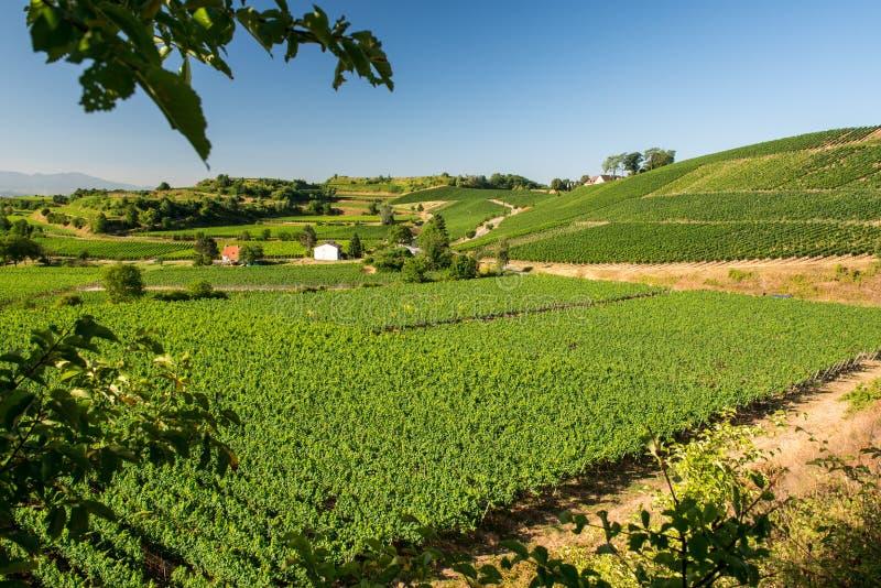 Mooi Wijngaardlandschap in Ihringen, Zuid-Duitsland stock afbeeldingen