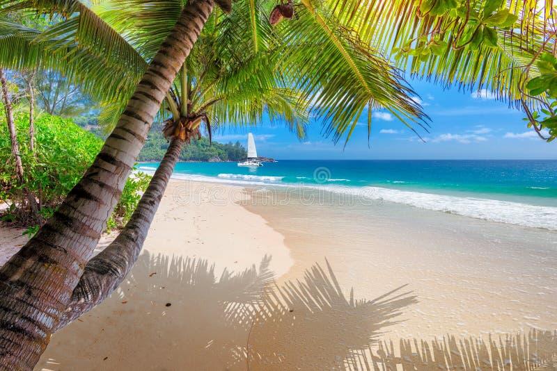 Mooi zandig Caraïbisch strand met palm en een varende boot in het turkooise overzees royalty-vrije stock afbeelding