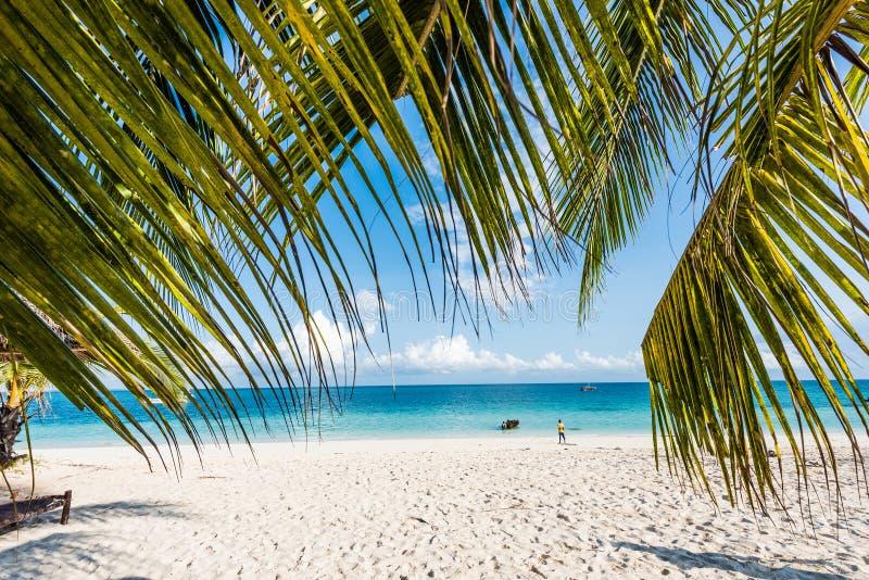 Mooi zeegezicht met palmtakken stock fotografie
