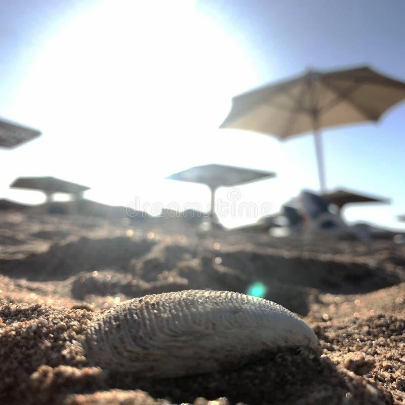 Mooi zeegezicht op blauwe overzees in openlucht met geel zand stock foto