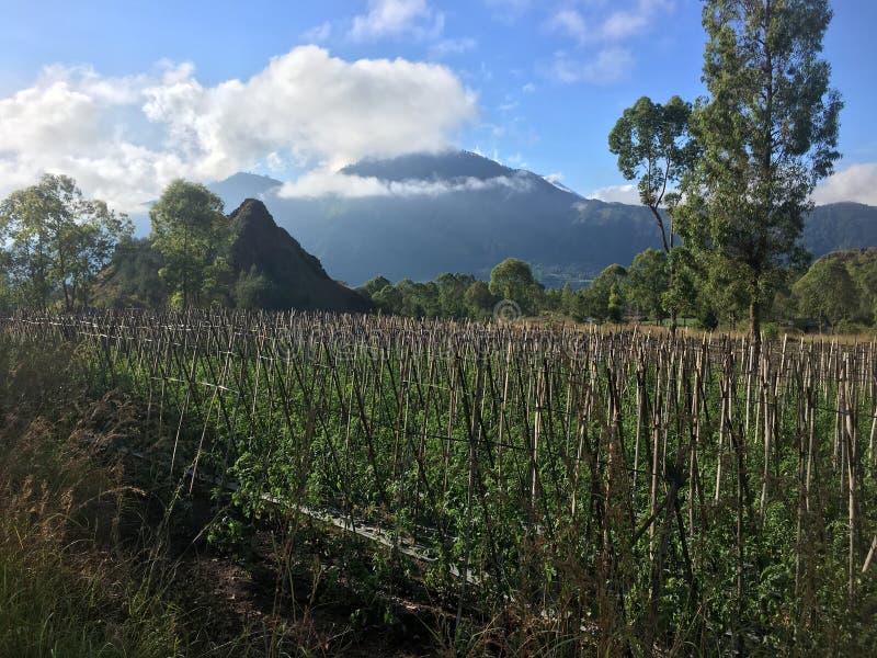 Mooi zet Batur Volcano Farm Land in Bali, Indonesië op royalty-vrije stock afbeelding