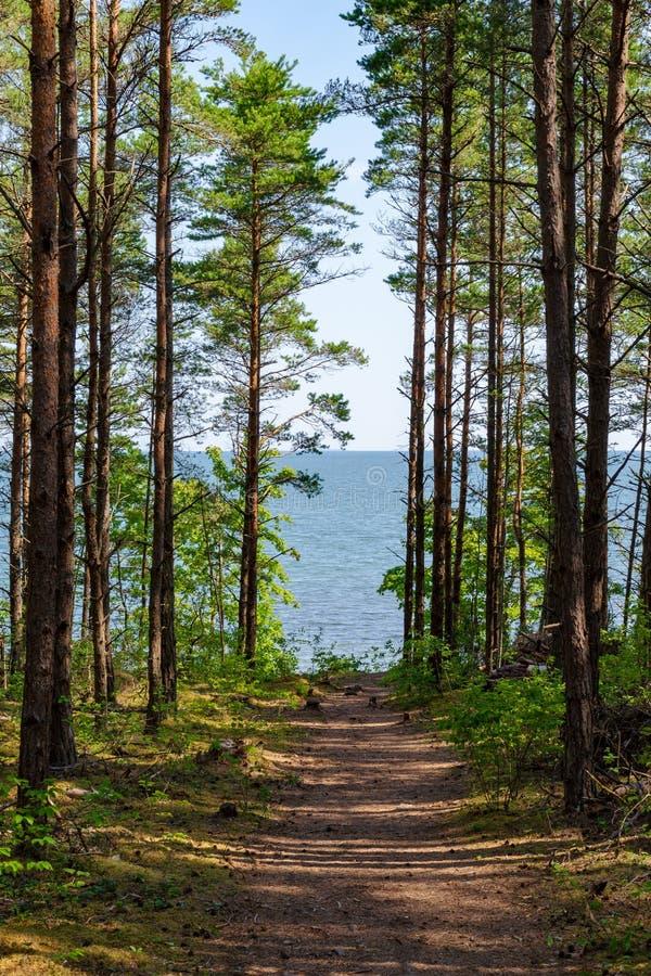 Mooi zie landschap in Saaremaa, Estland royalty-vrije stock fotografie