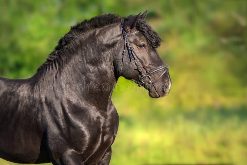 Mooi zwart ontwerp royalty-vrije stock fotografie