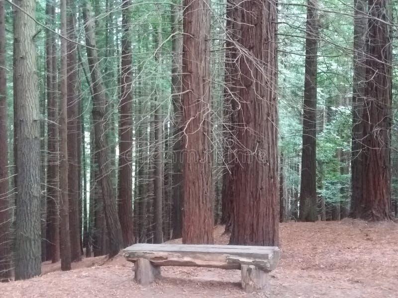 Mooie aard bij de ochtend in het bos royalty-vrije stock afbeelding