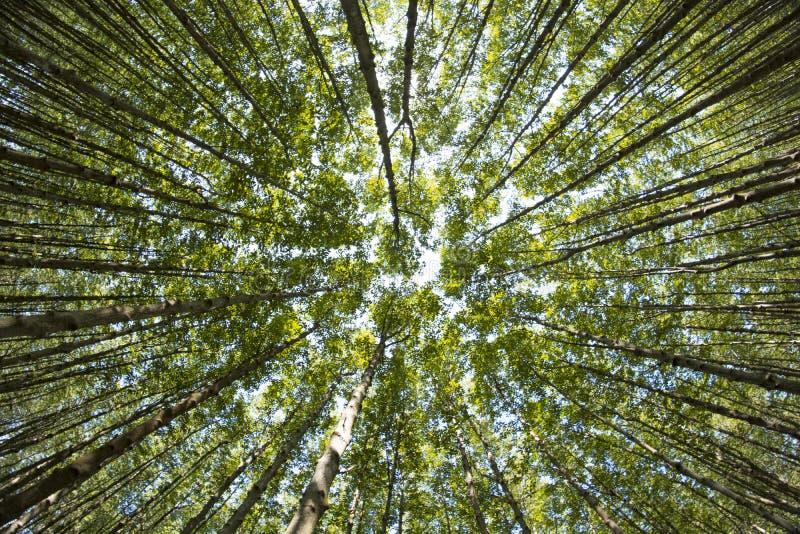 Mooie aard bij ochtend in het nevelige de lentebos met zon royalty-vrije stock afbeeldingen